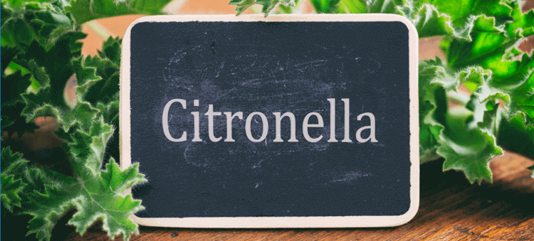 does citronella work