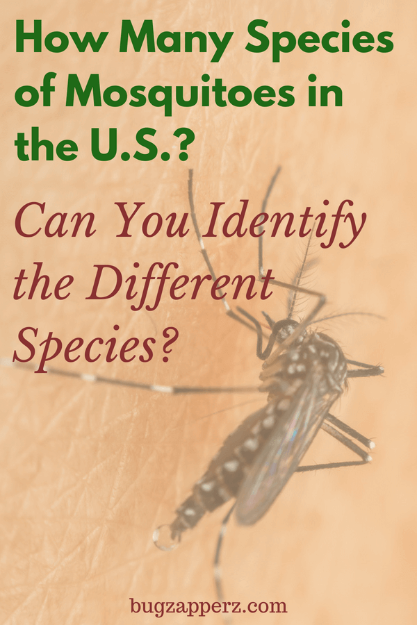 Mosquito genus and species in the U.S.