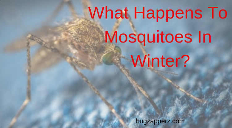 where do mosquitoes go in the winter