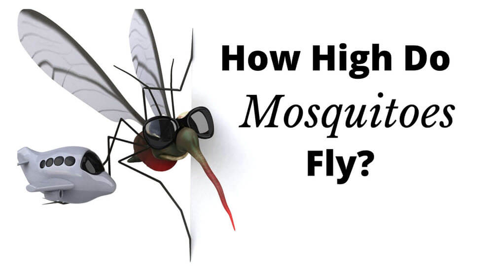 How High Do mosquitoes Fly