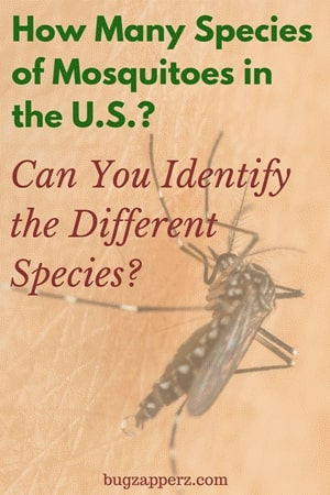 species of mosquitoes in USA