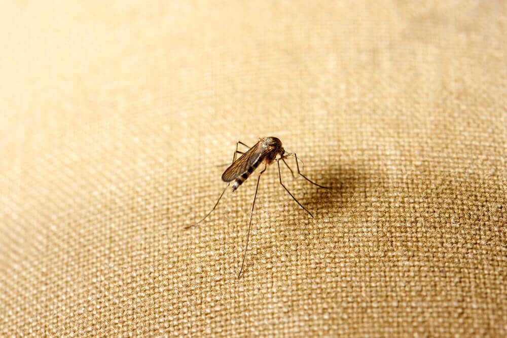 mosquito trying to bite through clothing